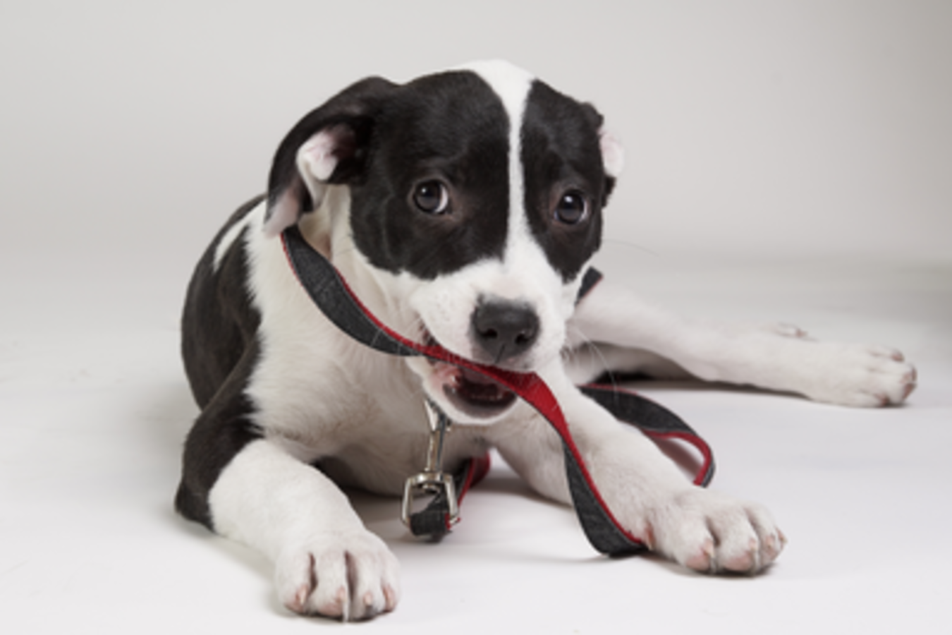 Can Your Dog's DNA Transform Human Health and Aging? | SXSW