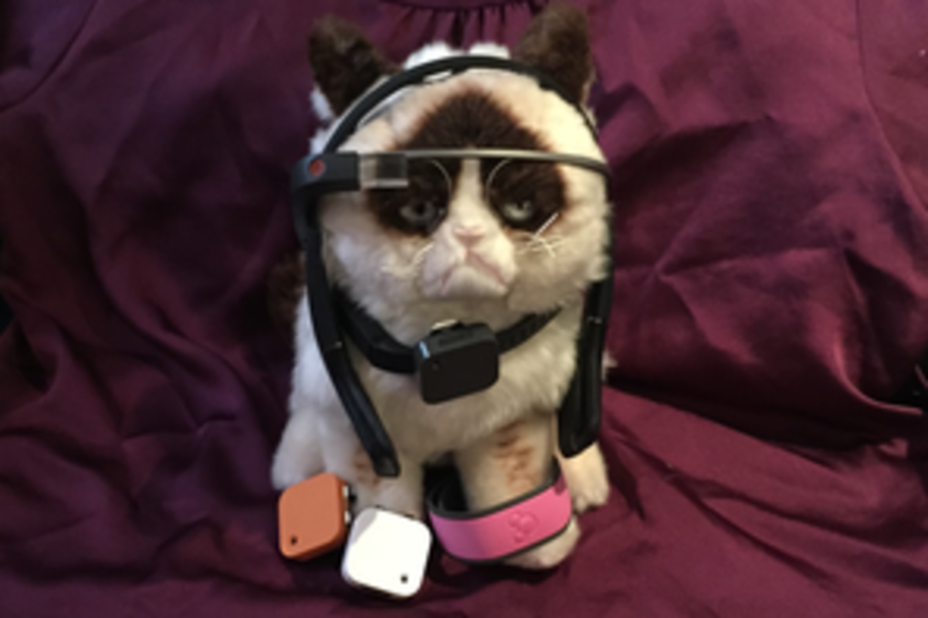 Wearable Technology - SXSW Grumpy Cat